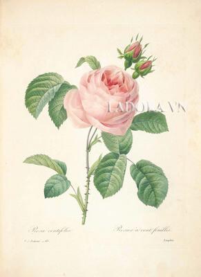 tranh treo tường hoa hồng đẹp tại ladora