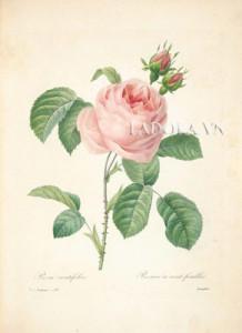 Tranh treo tường hoa hồng tại Ladora.vn